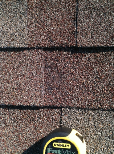 Roof Shingle Hail Damage Example Waco Roofing